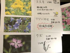 秋の七草カード